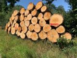 null - Eichen Rundholz / Oak Log`s