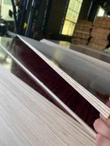 null - Siberian Larch Commercial Plywood, 9/ 12/ 24 mm Thick