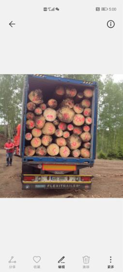 Spruce-Peeling-Logs