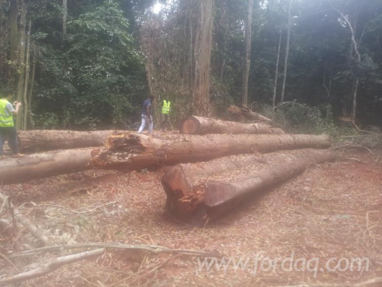 Subcontracting-Timber-Services