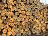 null - Verkauf von Fichtensägeblöcken, 20-25 cm Durchmesser