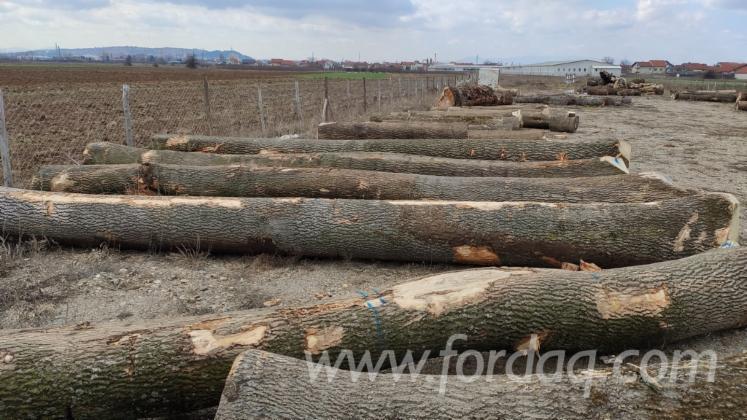 White-Ash-Veneer-Logs--Grade-A