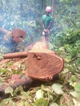 null - Rhodesian Copalwood, African Rosewood, Teak Rinde