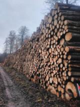 null - Spruce Industrial Grade /Pulp Logs, 8 + cm Diameter
