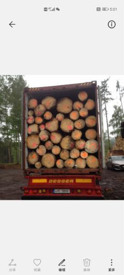 Spruce--Siberian-Spruce-Peeling-Logs