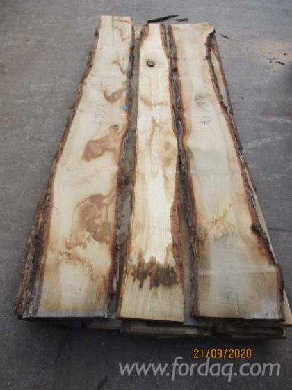 Vindem-Cherestea-Netivit%C4%83-bulzi-Stejar-26-mm