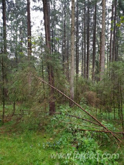 Noble-Fir-Spruce-Veneer-Logs-for-Sale