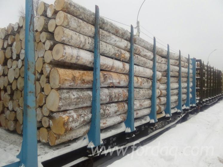 White-Birch-Saw-Logs