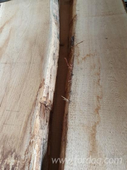 Vindem-Cherestea-Netivit%C4%83-bulzi-Stejar-40--50-mm