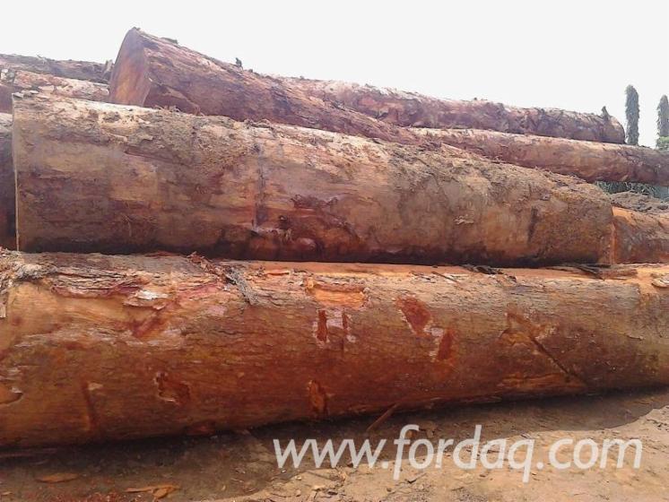 Freshly-Cut-Azobe--Okan-Logs