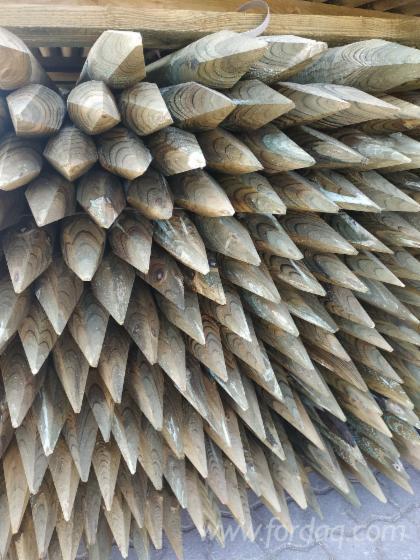 Paliki--Sosna-Zwyczajna---Redwood