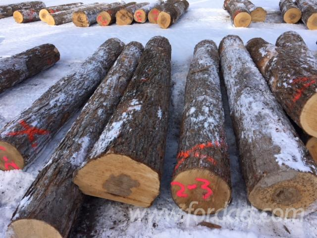 Hardwood-Logs-from-Ontario--Canada