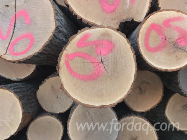 Venta-Troncos-Para-Aserrar-Roble-Rojo-Canad%C3%A1