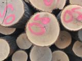 null - Red Oak Logs for Sale, 12+ in Diameter
