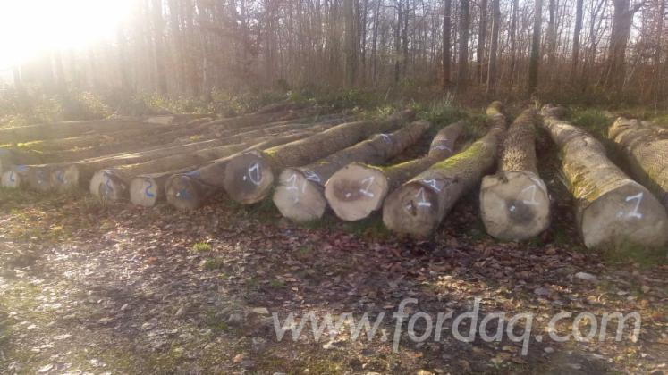 Selling-White-Ash-Sawn-Logs