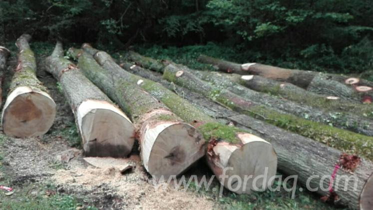 Selling-White-Oak-Sawn-Logs