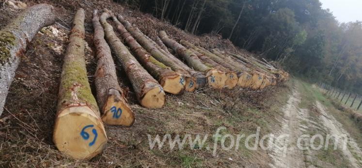 Selling-White-Oak-Sawn-Logs