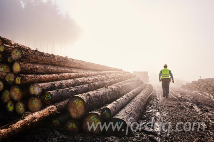 German-Origin-Spruce-Logs