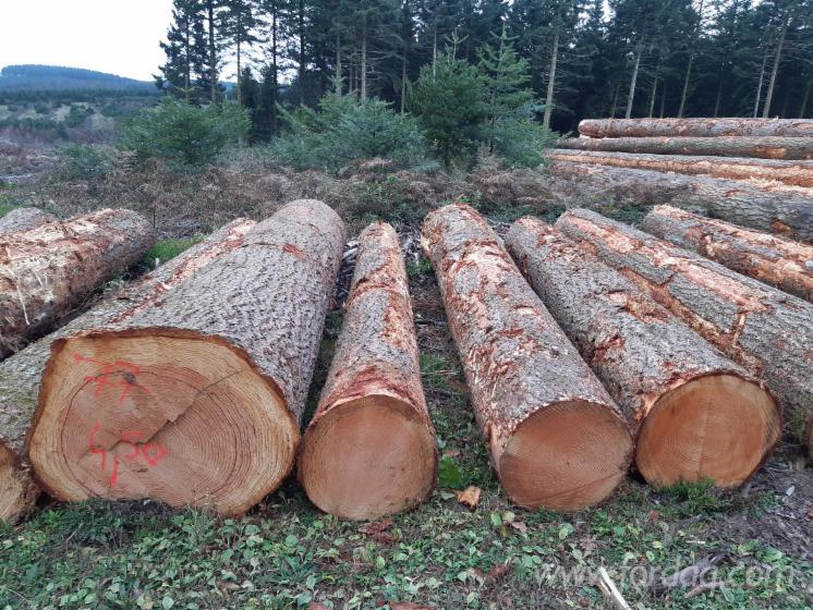 Douglas-Fir-50--cm-B-Saw-Logs