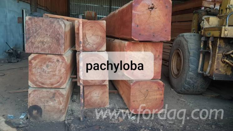 Tali---Pachyloba-Square-Logs