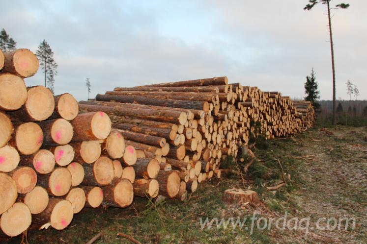 Pine--Spruce-Sawn-Logs
