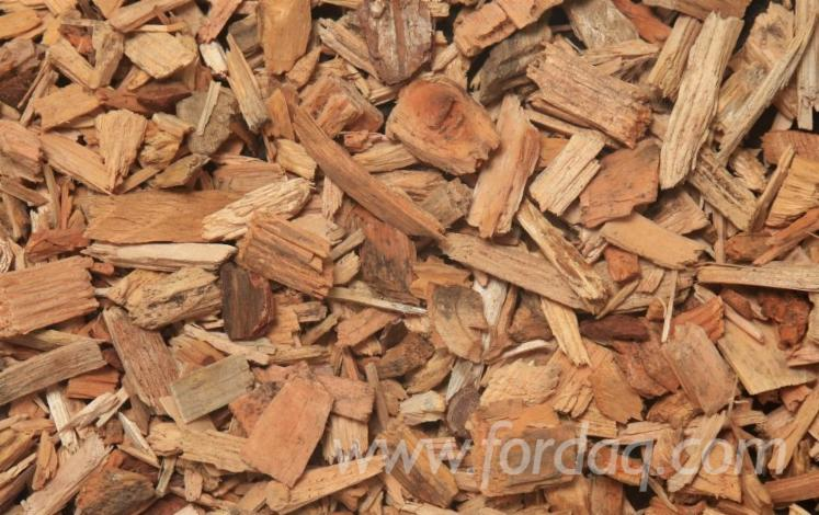 Jod%C5%82a-Pospolita---Sosna-Zwyczajna---Redwood
