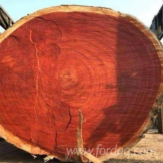 AD-KD-FAS-Quality-Padouk-Sawn-Logs
