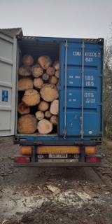 null - Larch/ Spruce Industrial Logs, 25+ cm Diameter