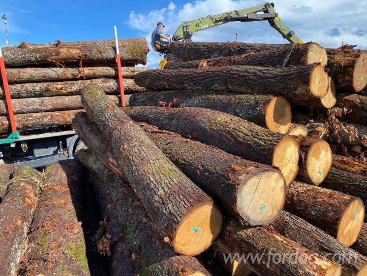 Oak-Sawn-Logs