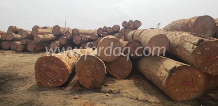 Fresh-Cut-Azobe-Industrial-Logs