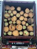 null - Buying Spruce Industrial Logs, 25+ cm Diameter