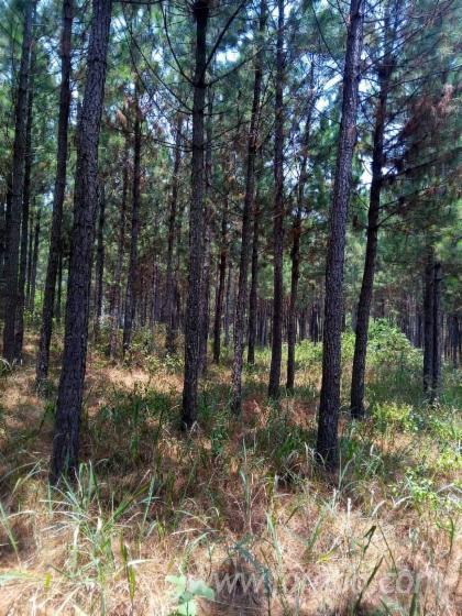 Vender-Bosques-Uganda-Kasanda