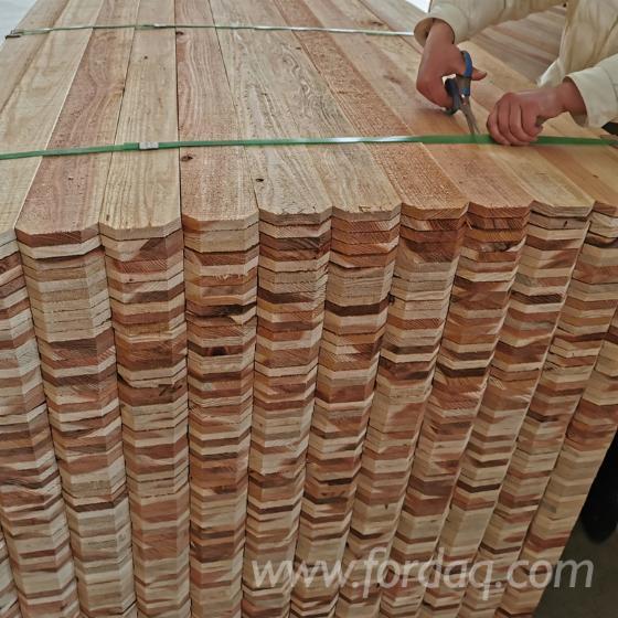 Chinesische-Tr%C3%A4nenzypresse-