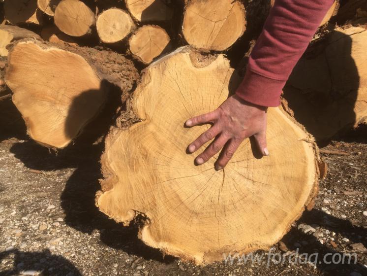Acacia-Sawn-Logs