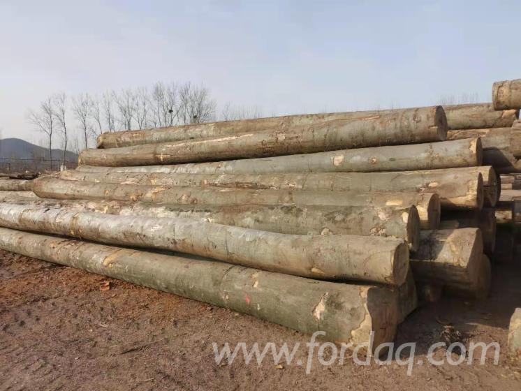 Beech--White-Oak-Logs-Demand