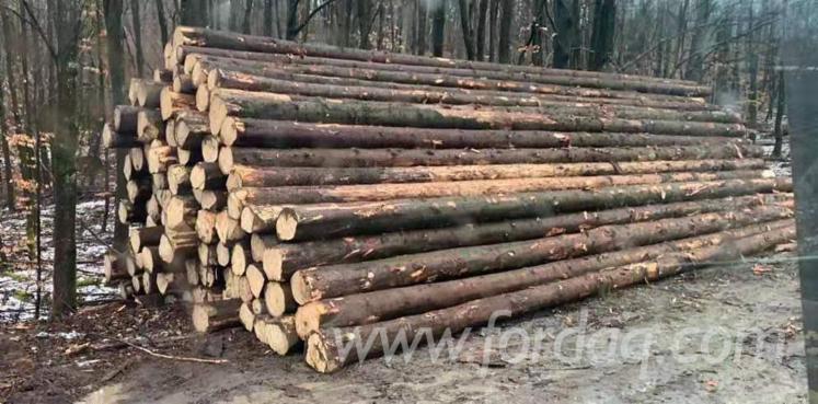 Fresh-Cut-Spruce-Logs-Purchase