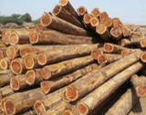 null - African Teak Round Logs, 40-50+ cm