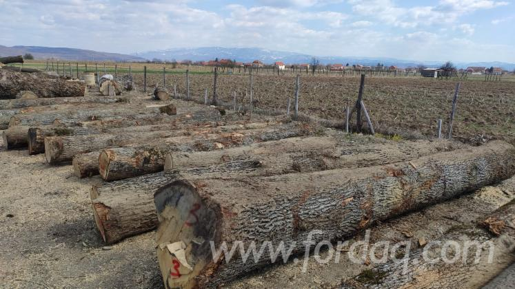 Oak-Logs-%28Quercus-Petraea%29-Ready-to-Load