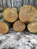 null - Beech Industrial Logs, 30 cm Diameter