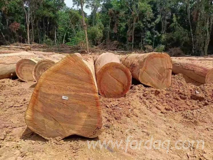 Offering-Azobe-Sawn-Logs