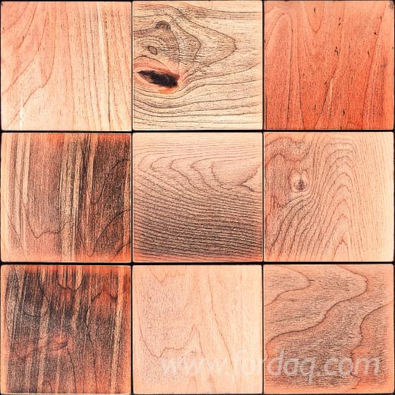 Puno-Drvo--Breza