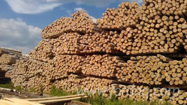 St%C3%A4mme-F%C3%BCr-Die-Industrie--Faserholz--Birke