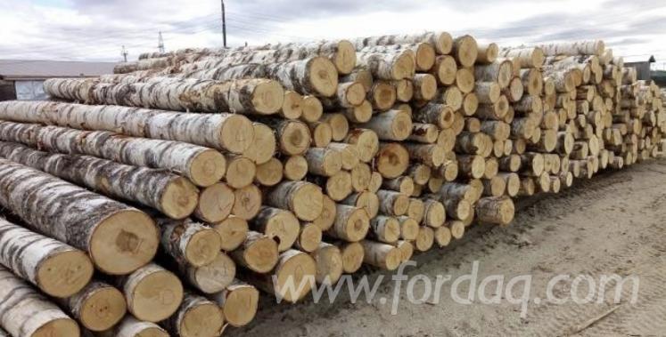 Birch-Logs-for-the-Production-of-Peeled-Veneer-%28Veneer