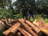null - 工业用木, 毛帽柱木, 非洲红木,马基比,罗得西亚Copalwood