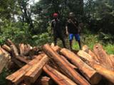 null - Stämme Für Die Industrie, Faserholz, Abura , Rhodesian Copalwood, African Rosewood