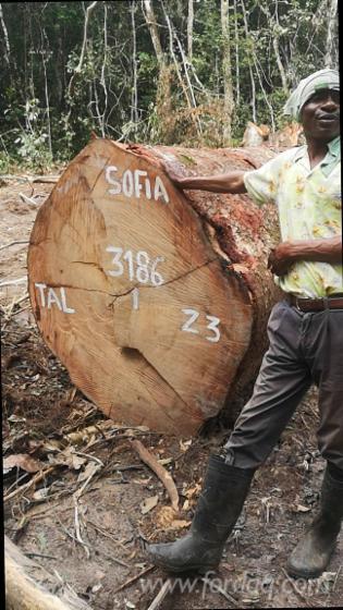 Tali-Sawn-Logs
