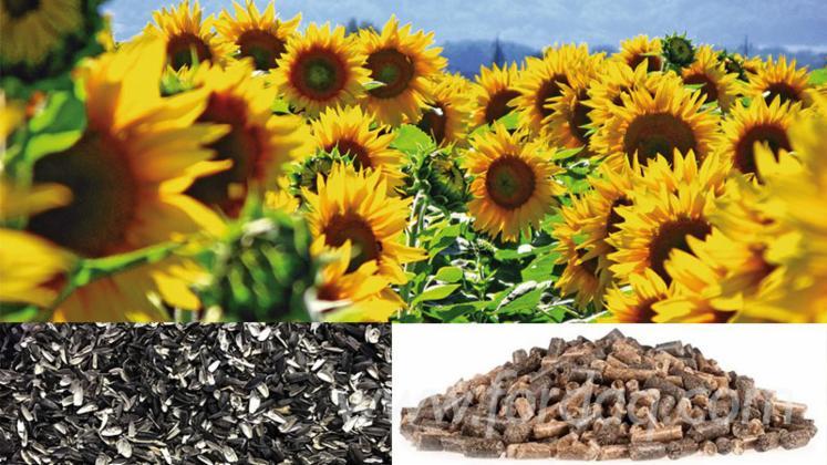 Sonnenblumen-Pellets
