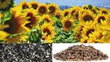 null - Looking for Sunflower Pellets