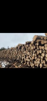 null - Venta Troncos Para Aserrar ISO-9000 Canadá Eastern Canada