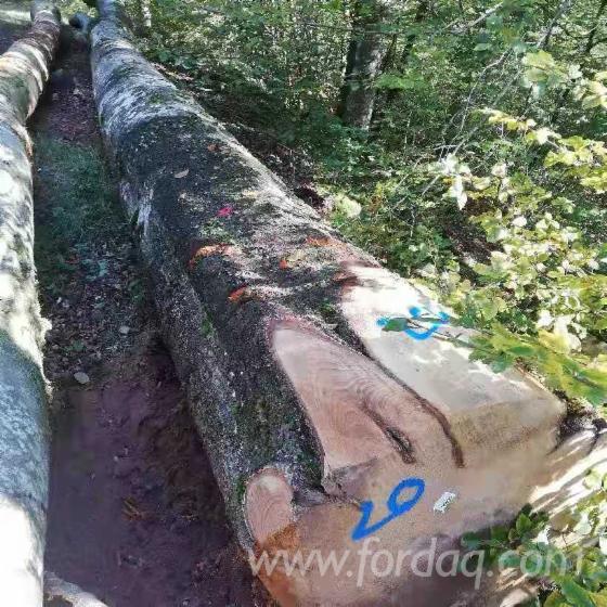 Beech-Sawn-Logs